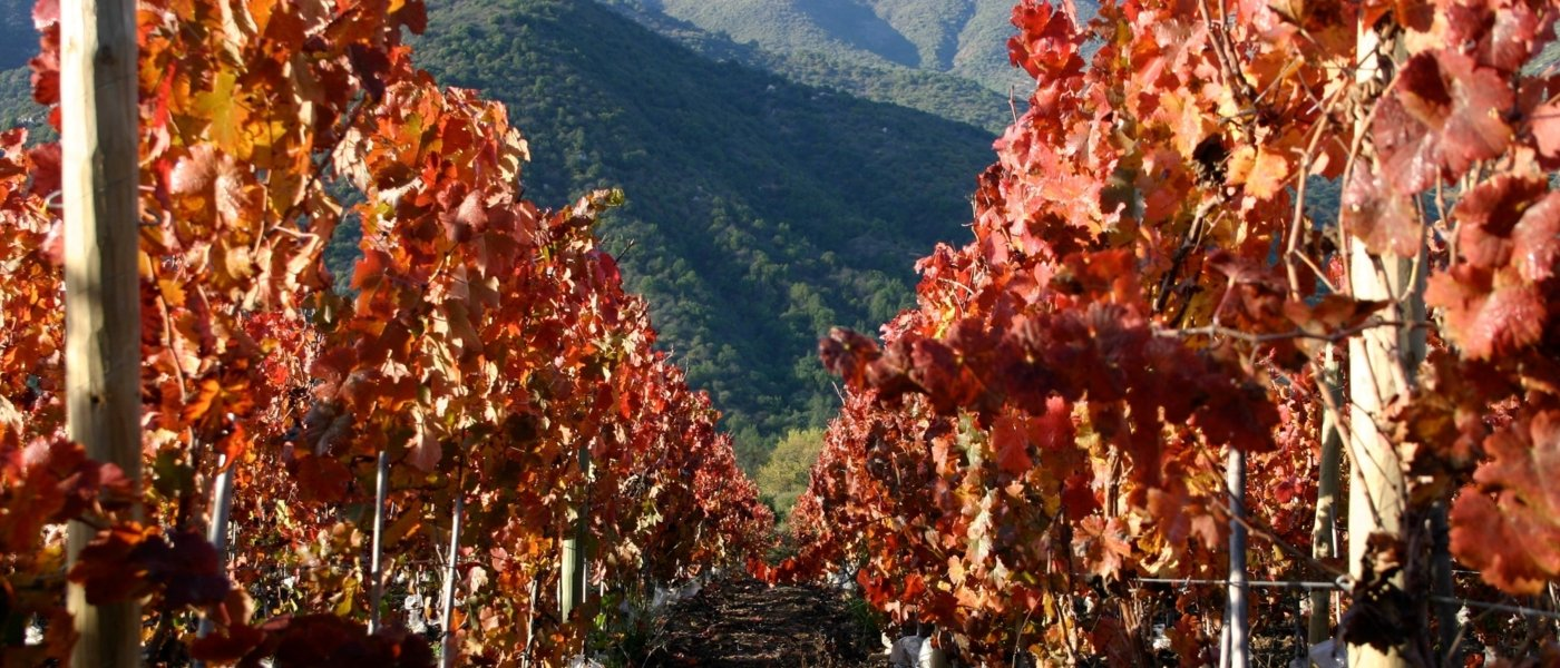 wine tours chile - Wine Paths