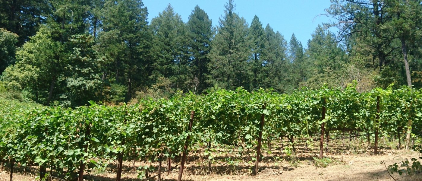 napa valley wine tours - Wine Paths