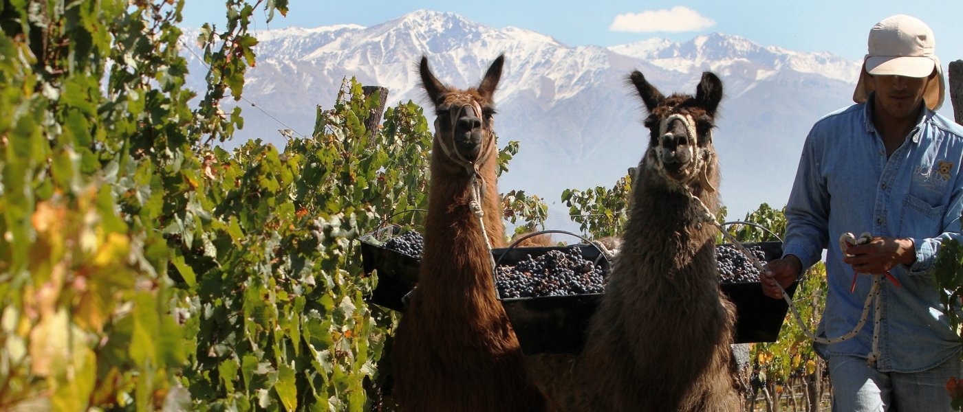 best luxury argentina wine tours - Wine Paths