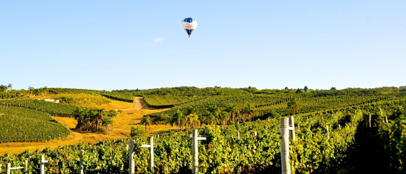best Uruguay wine tours - Wine Paths