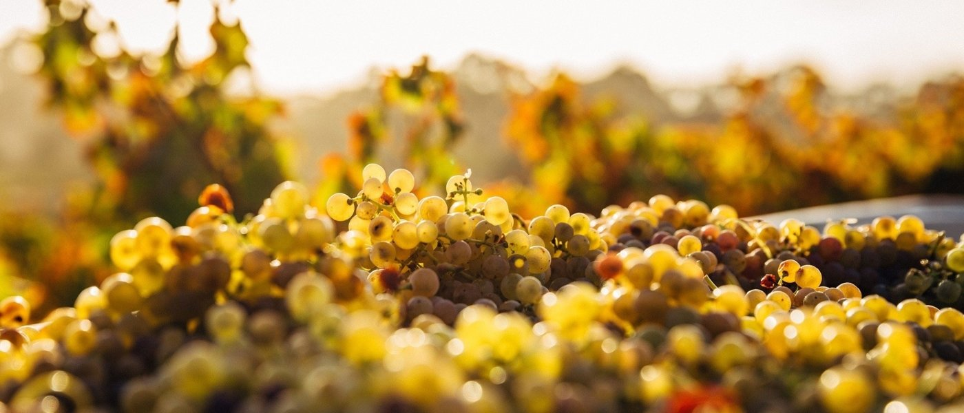 best sauternes wine tours - Wine Paths
