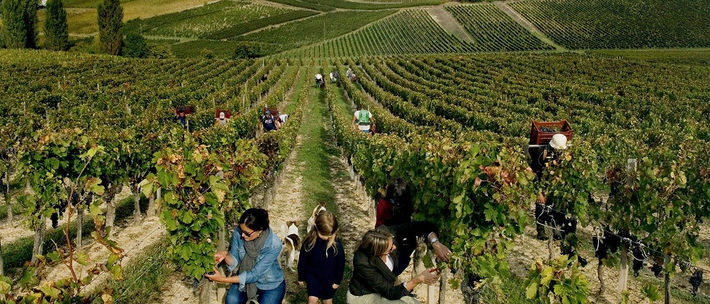 best wine tours in Pauillac in france - Wine Paths