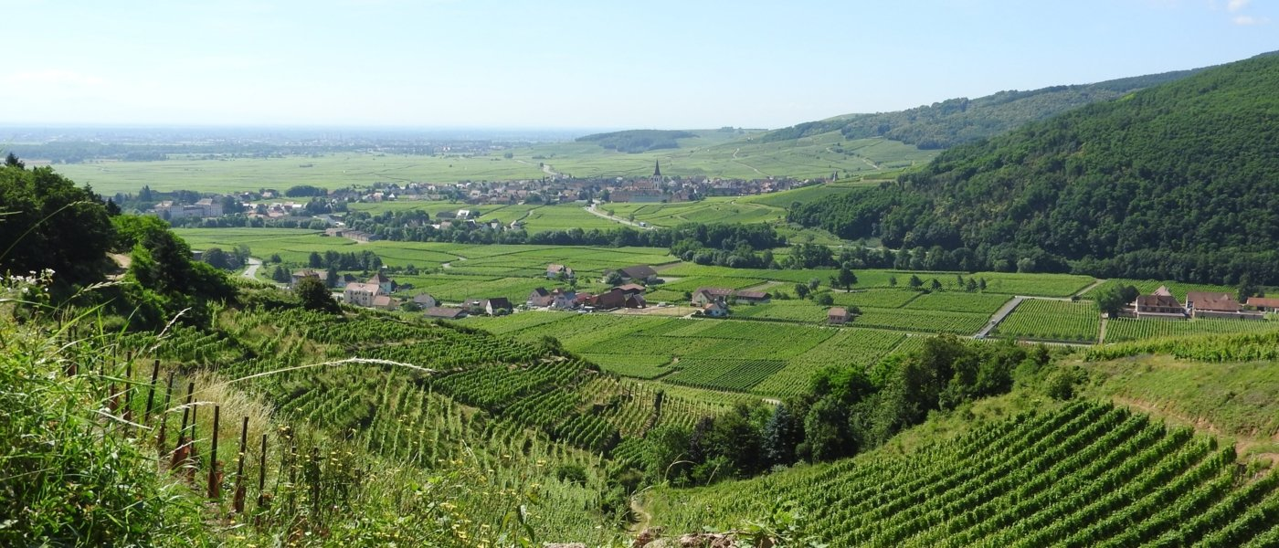 Alsace countryside - Wine Paths