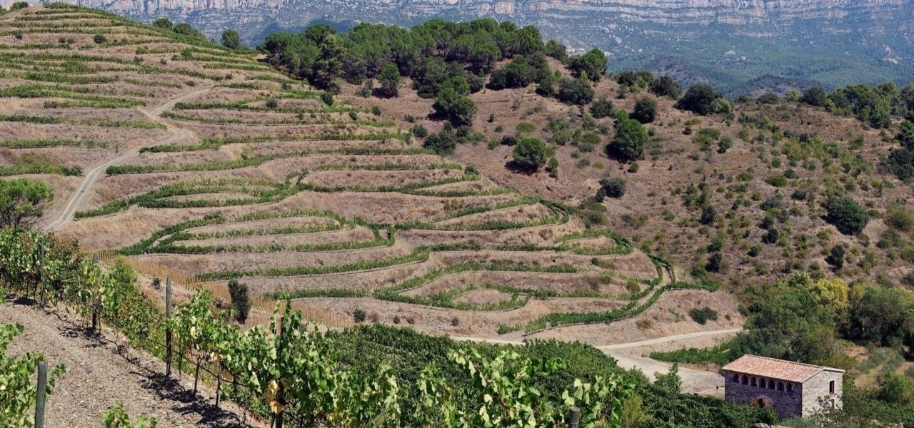 catalonia wine tours - Wine Paths