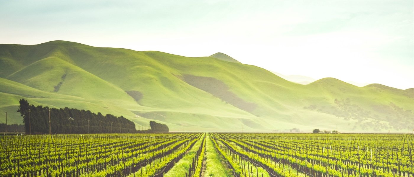 USA wine tours - Wine Paths