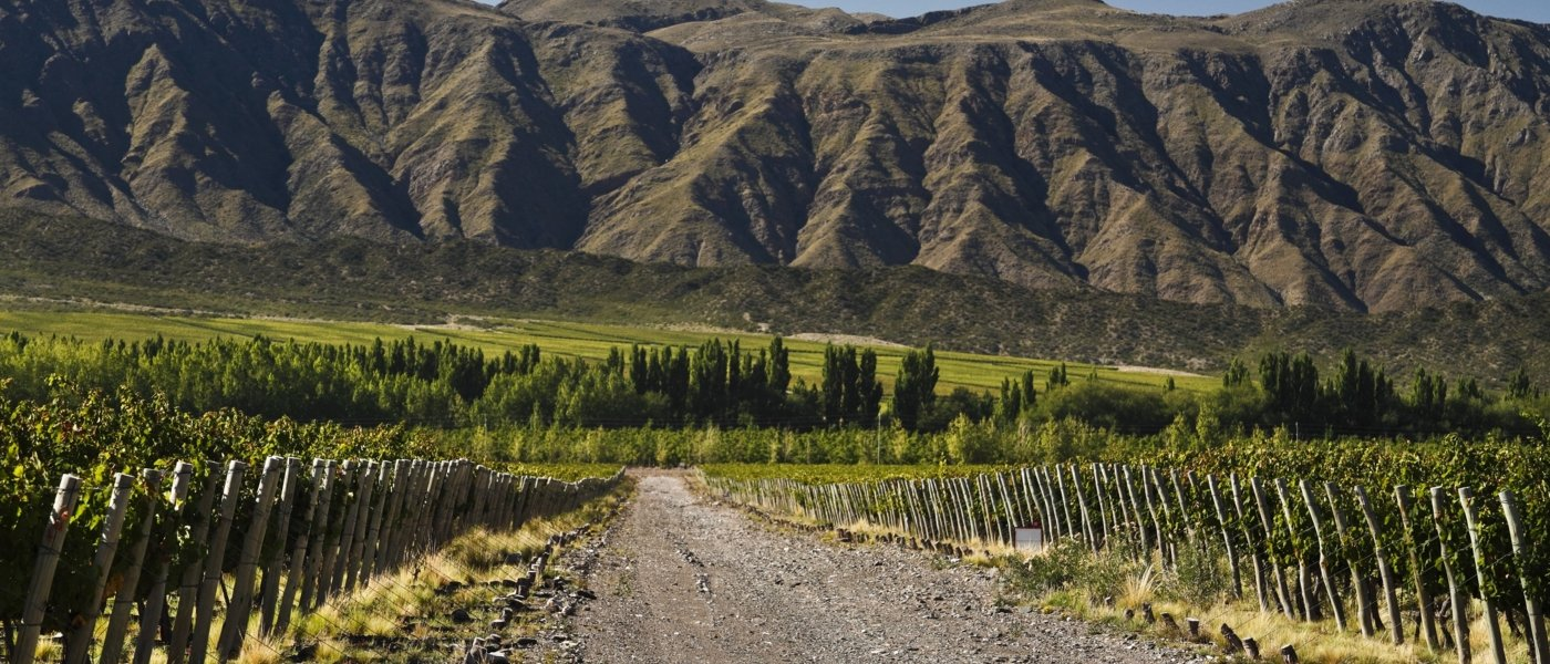 Vineyards Mendoza - Wine Paths