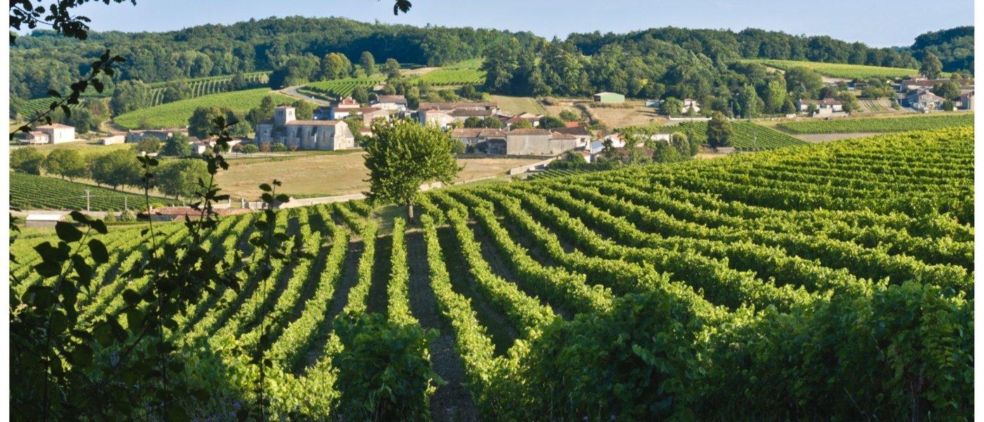 cognac wine tour
