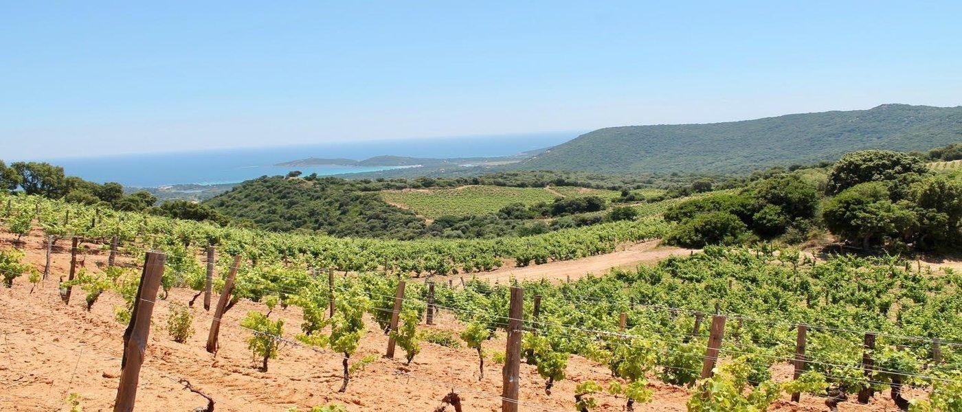 Corsica wine tour