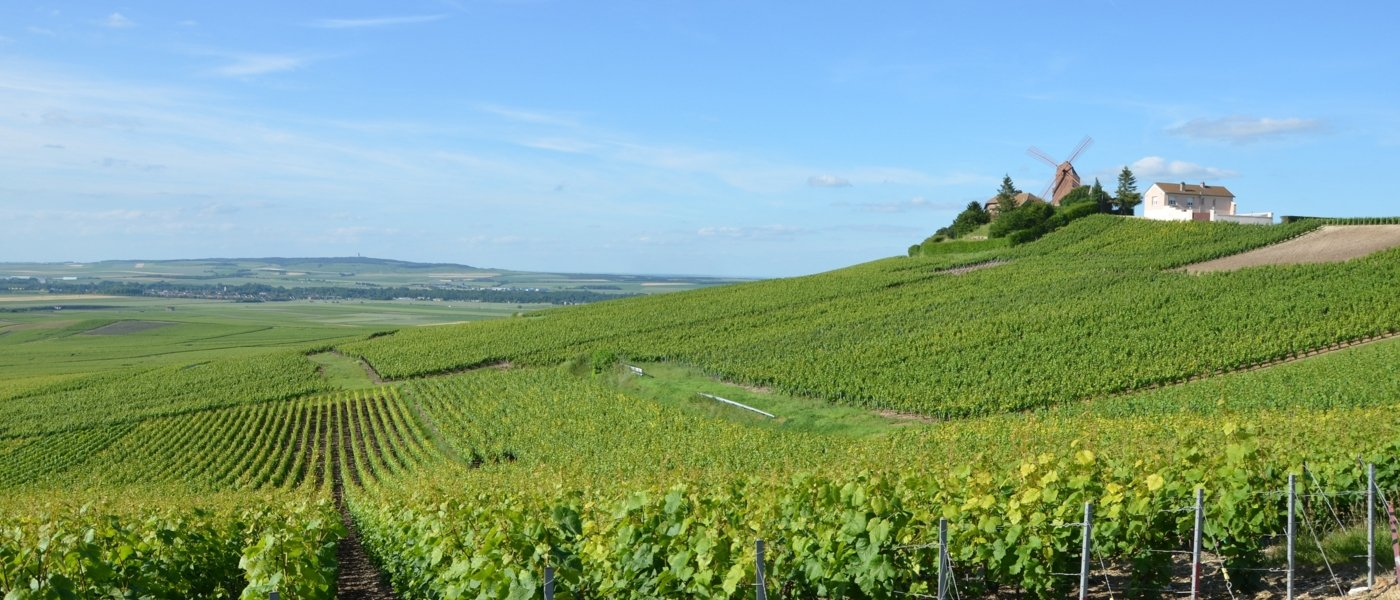 champagne tours - Wine Paths