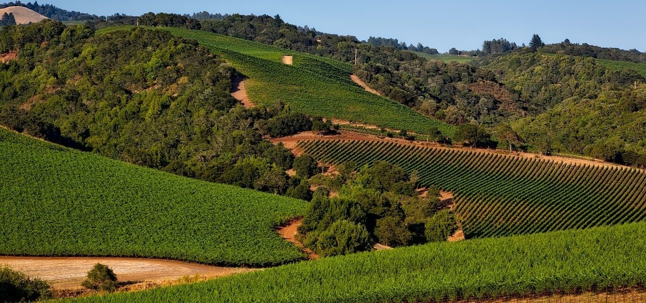 best sonoma valley wine tours - Wine Paths