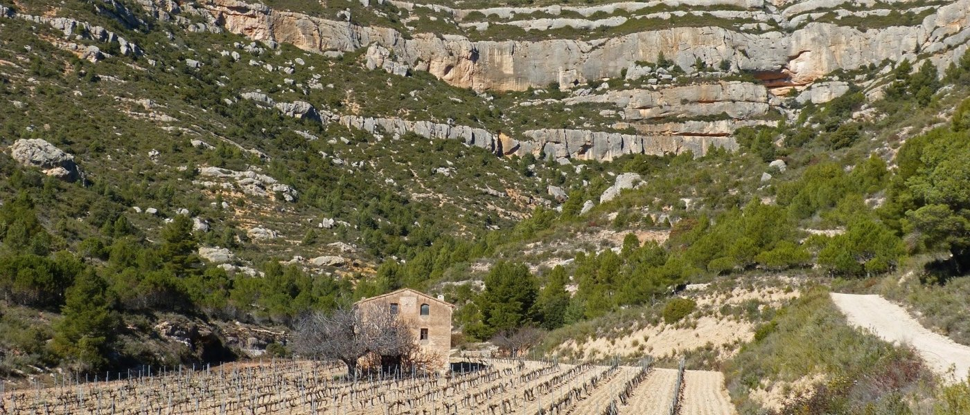 best wine tours in catalonia - Wine Paths
