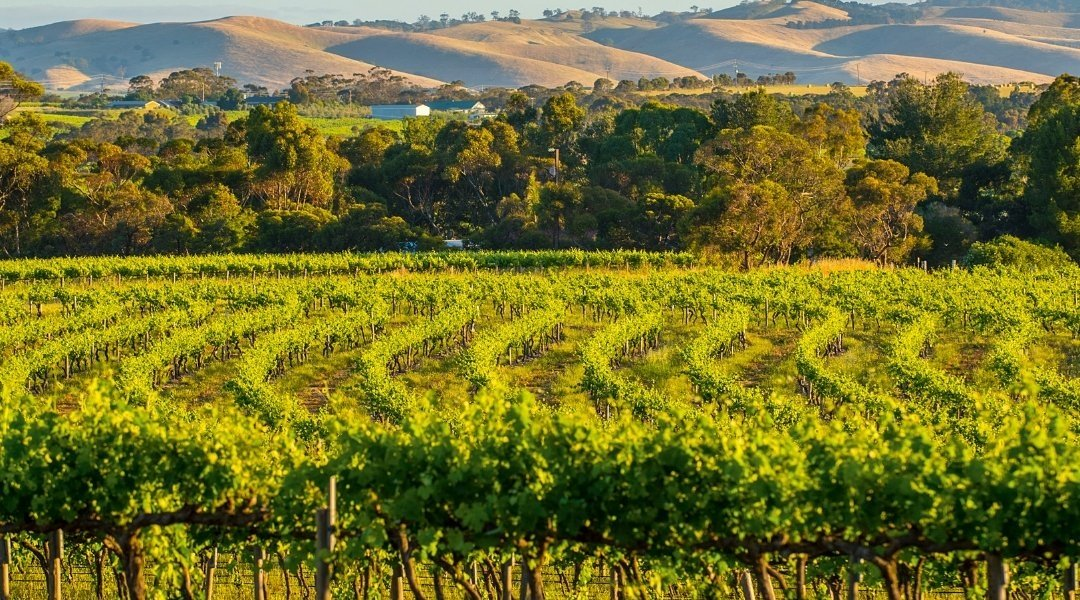 australian vineyards - Wine Paths