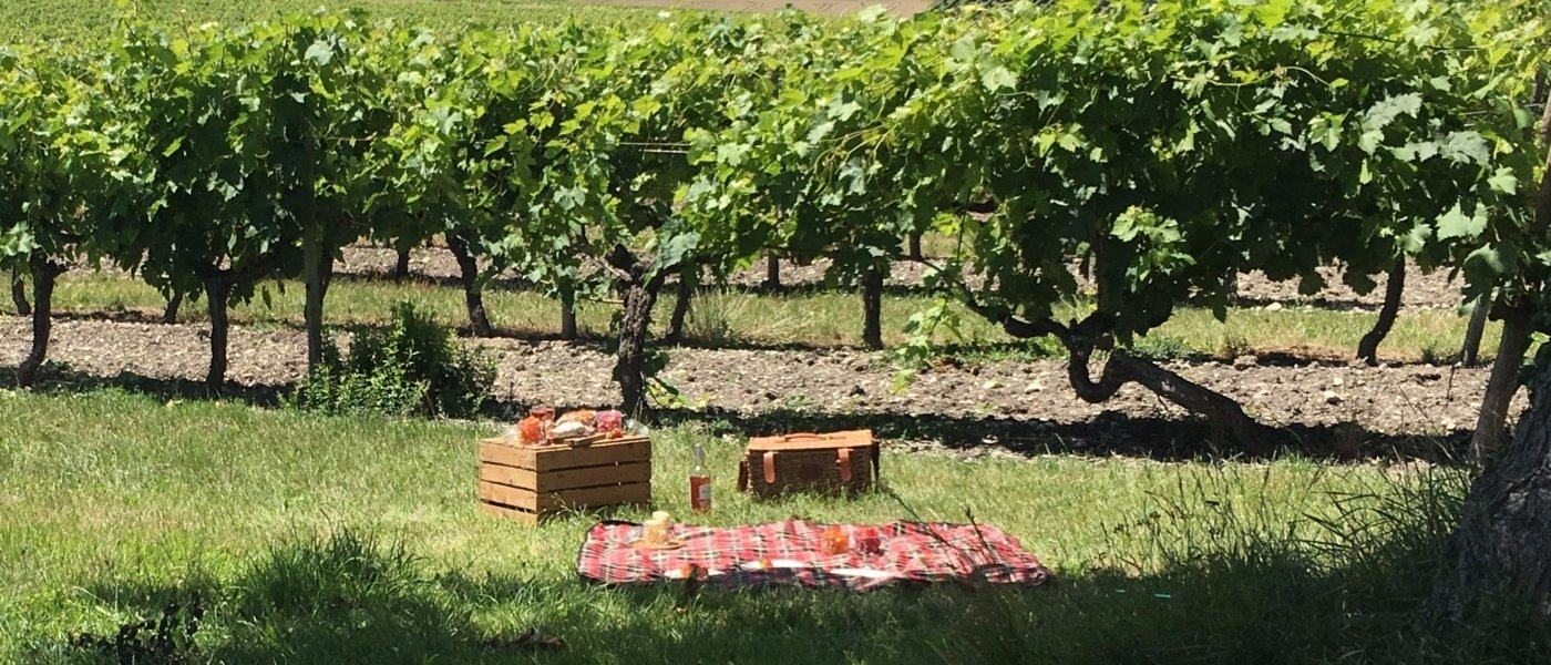 CHIC PICNIC IN THE VINEYARDS
