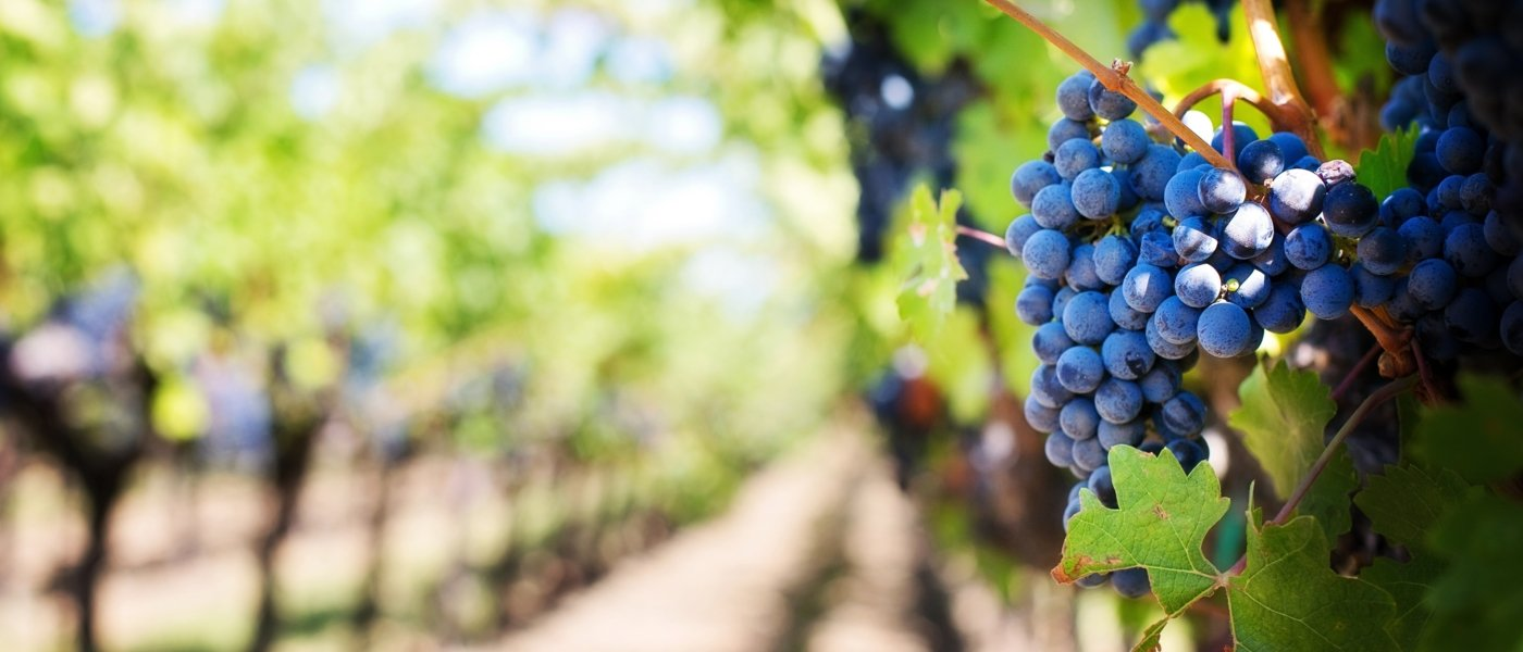 best wine tours - Wine Paths