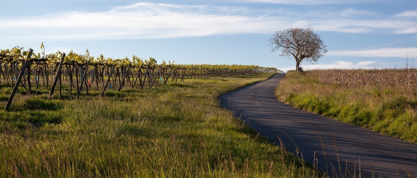 Bike Tour through the Cognac Countryside -  Wine Paths