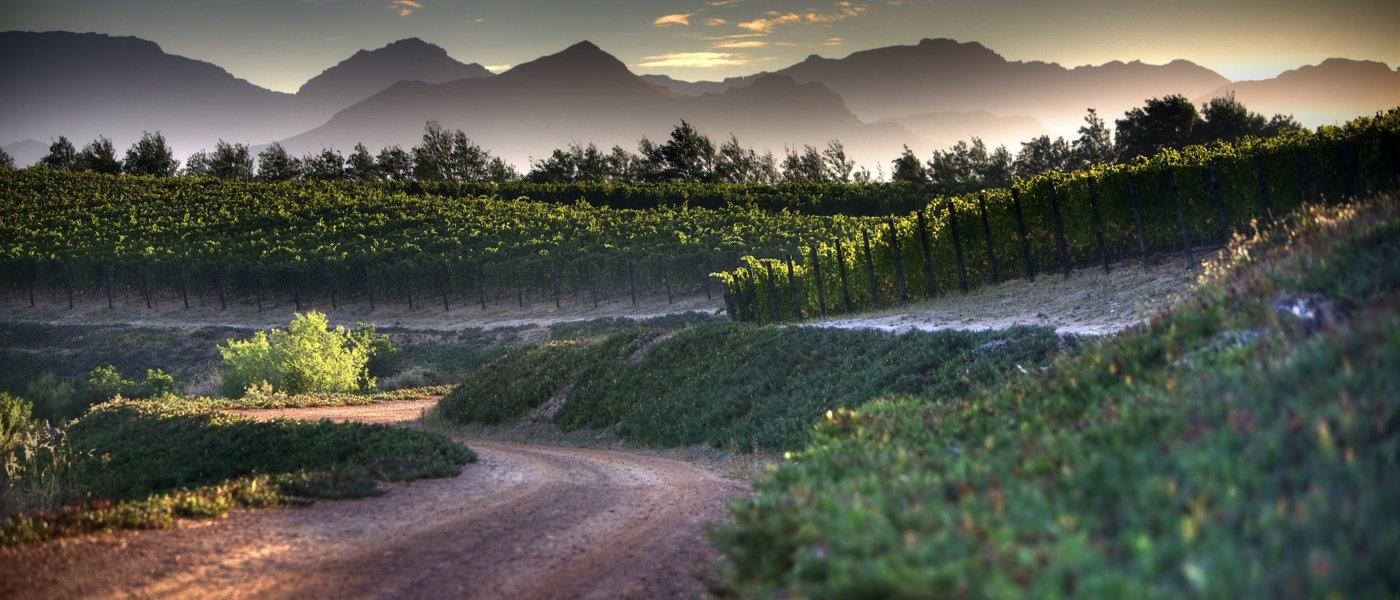 south africa wine tours - Wine Paths