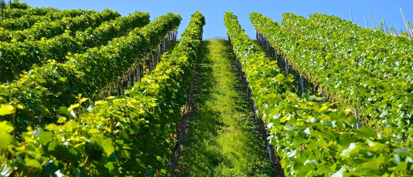 best wine tours in medoc - Wine Paths