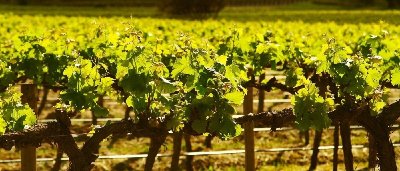 wine tours australia - Wine Paths