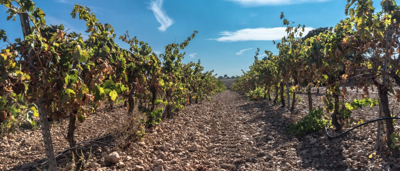 best wine tours in ribera del duero - Wine Paths