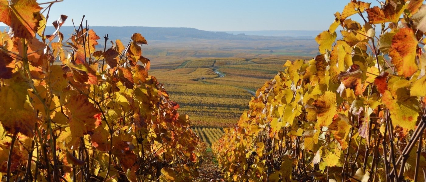 Local wine travel expert in Champagne, France