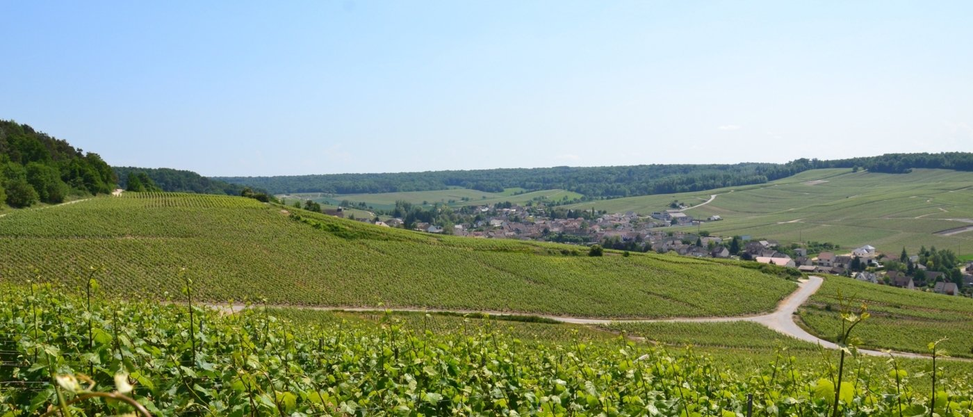 Champagne region - Wine Paths