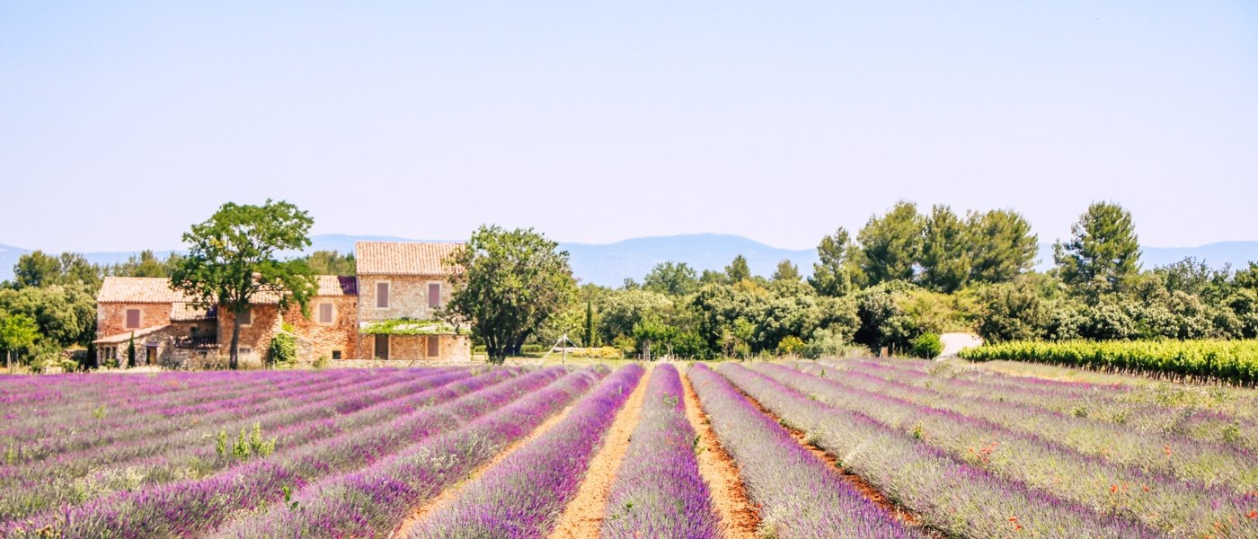 Provence - Lavender - Wine Paths