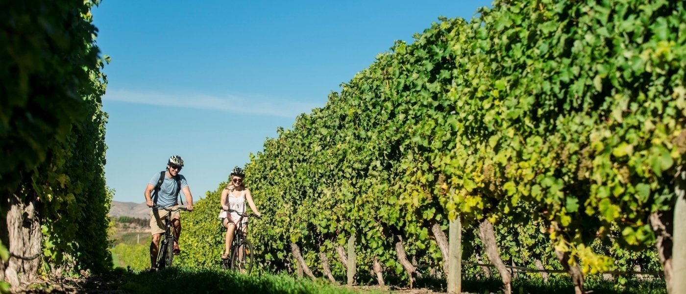 bespoke bike tours - Wine Paths