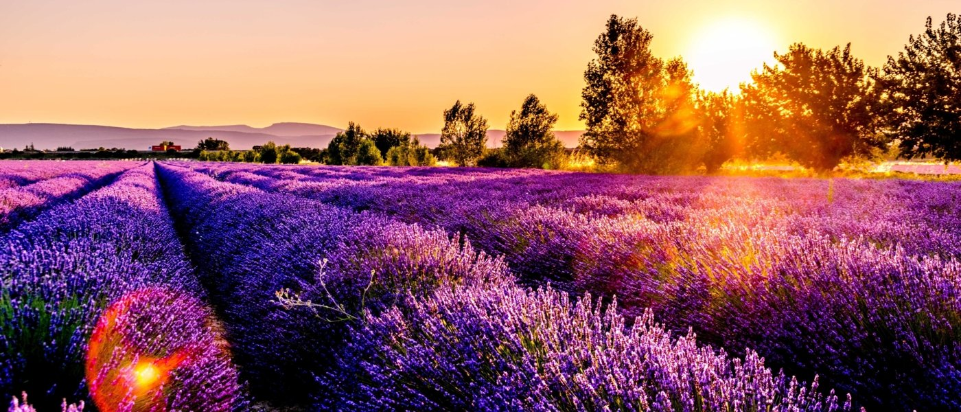 Provence wine tours - Wine Paths