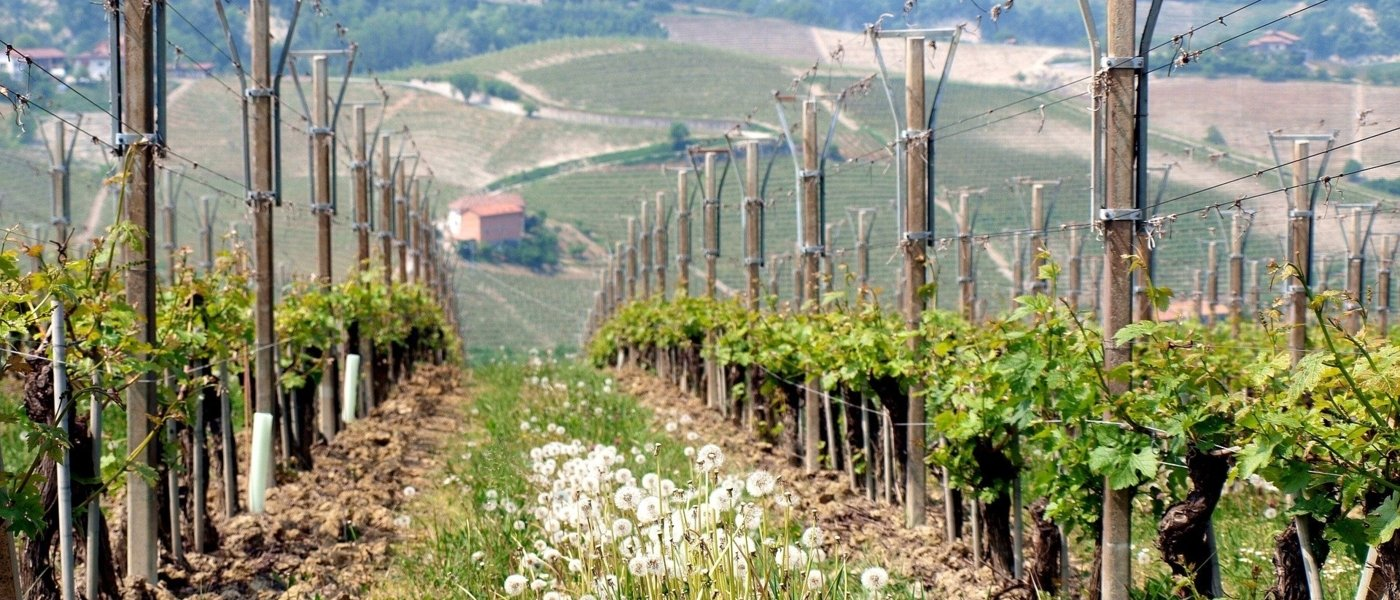 best chianti wine tours - Wine Paths