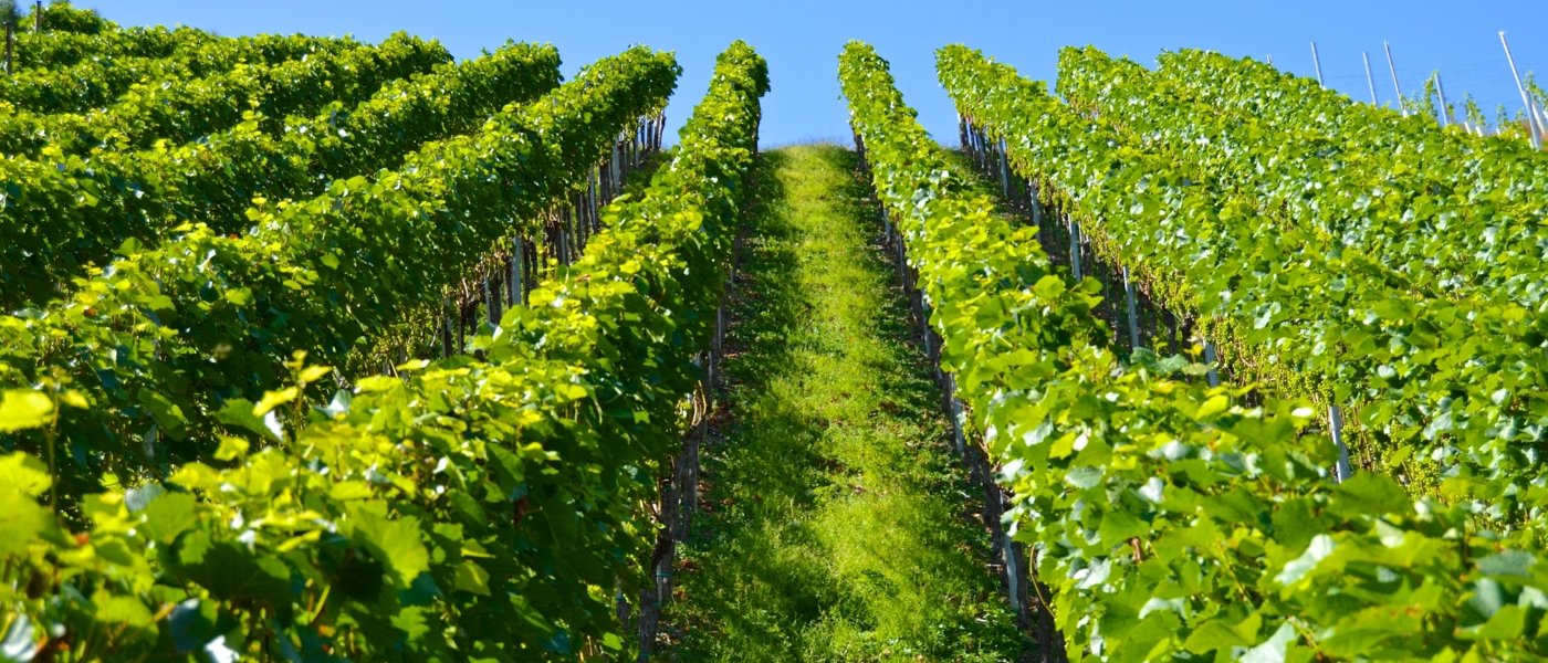 languedoc wine tours - Wine Paths