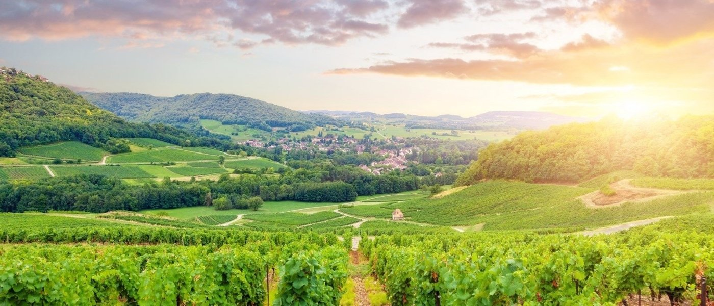 Local wine travel expert in Loire Valley, France