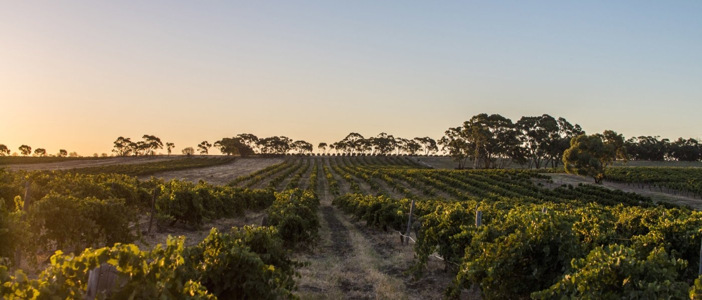 best wine tours in barossa valley - Wine Paths