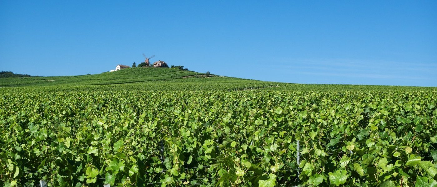 Champagne Luxury Tours - Wine Paths