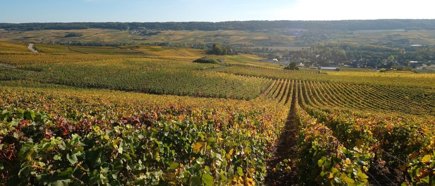 Champagne vineyards - Wine Paths
