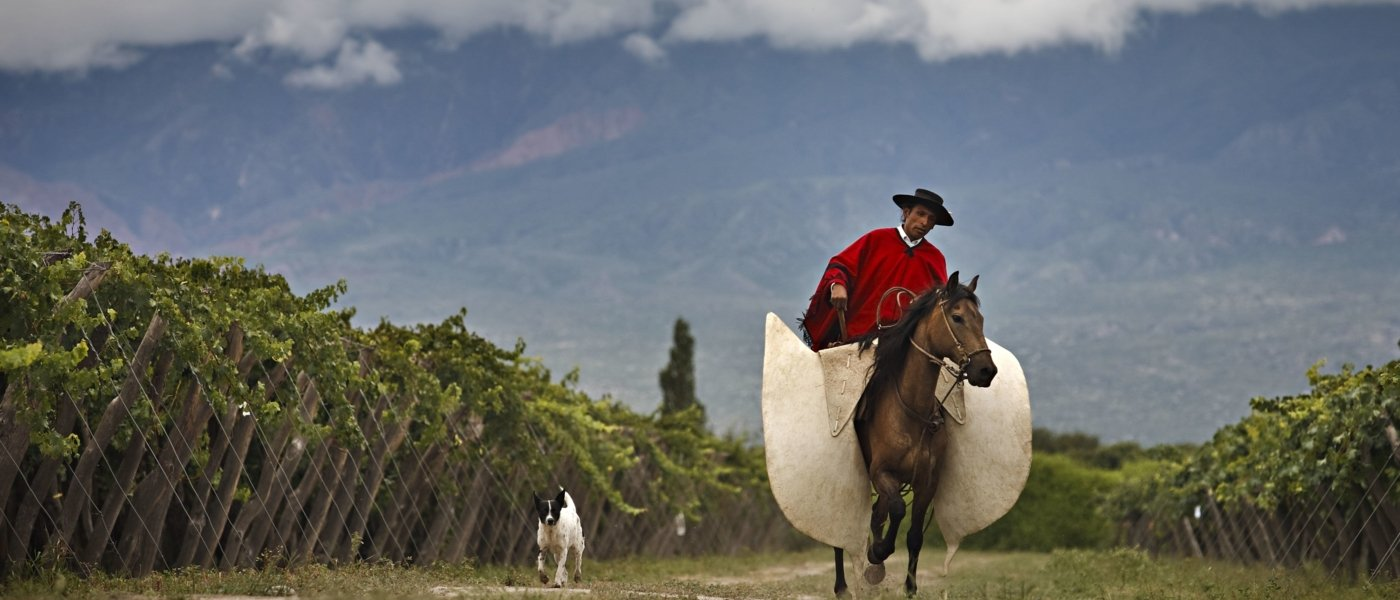 best wine tours in argentina - Wine Paths