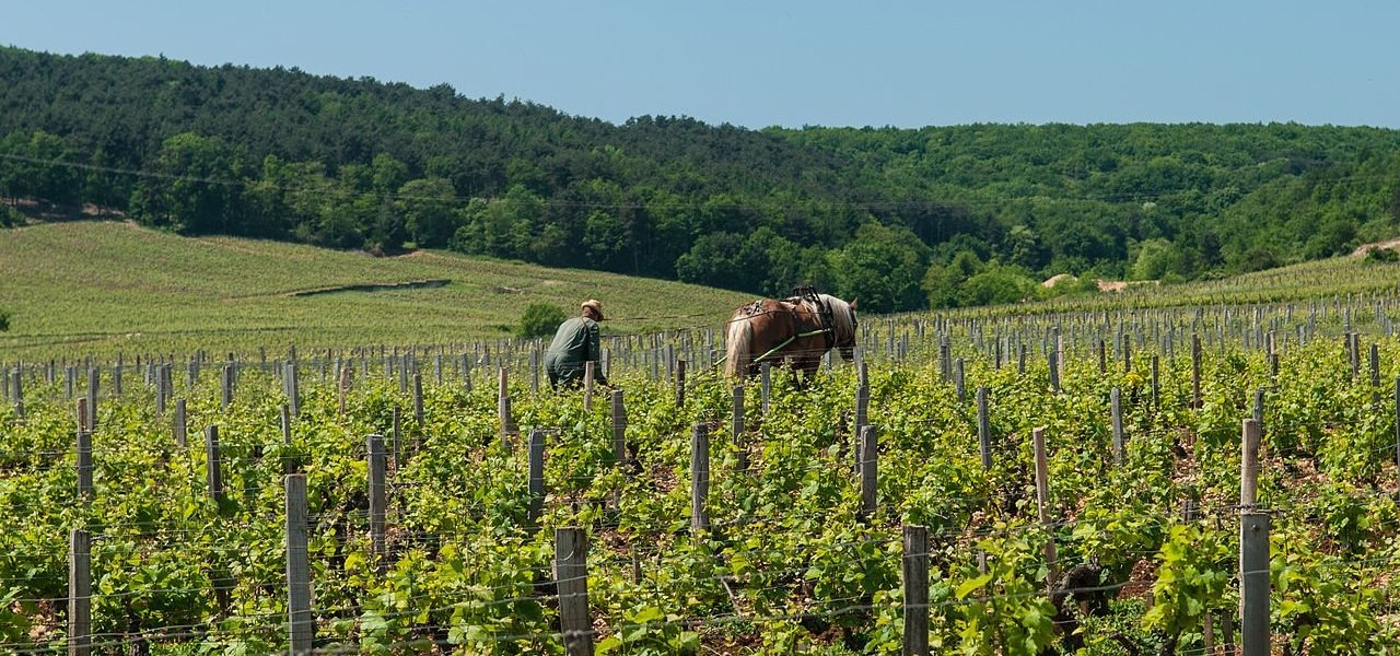 Luxury burgundy tours - Wine Paths