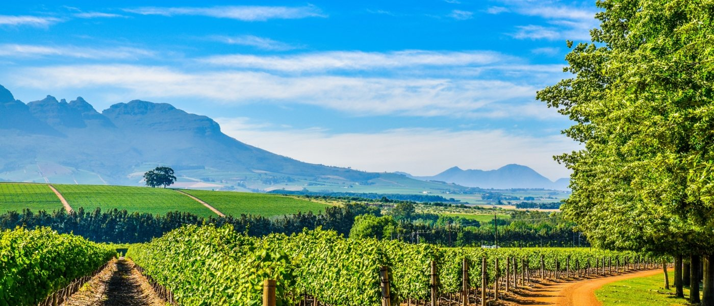 Local wine travel expert in South Africa