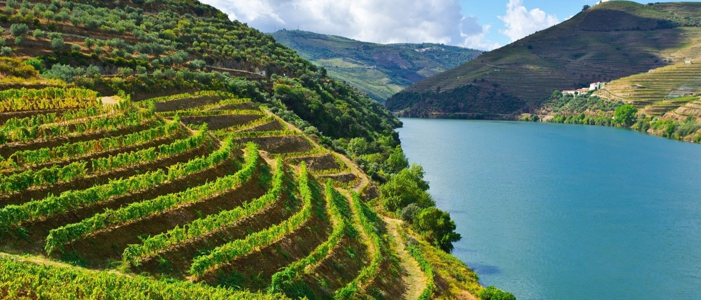 Local wine travel expert in Portugal
