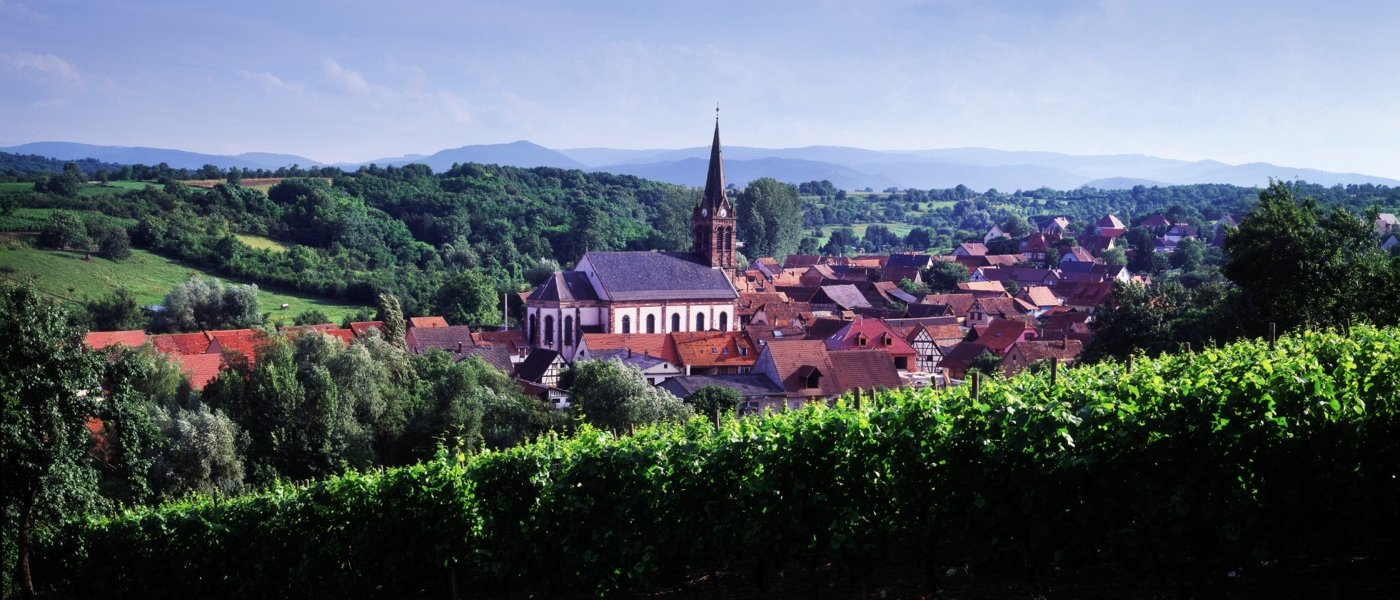 alsace wine tours - Wine Paths