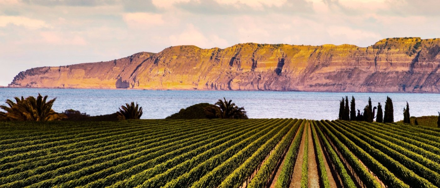 Local wine travel expert in New Zealand