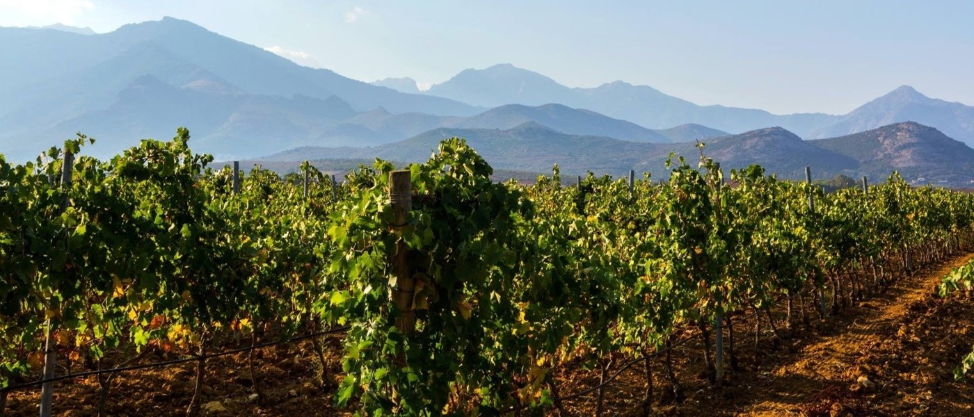 Vineyards in Corsica
