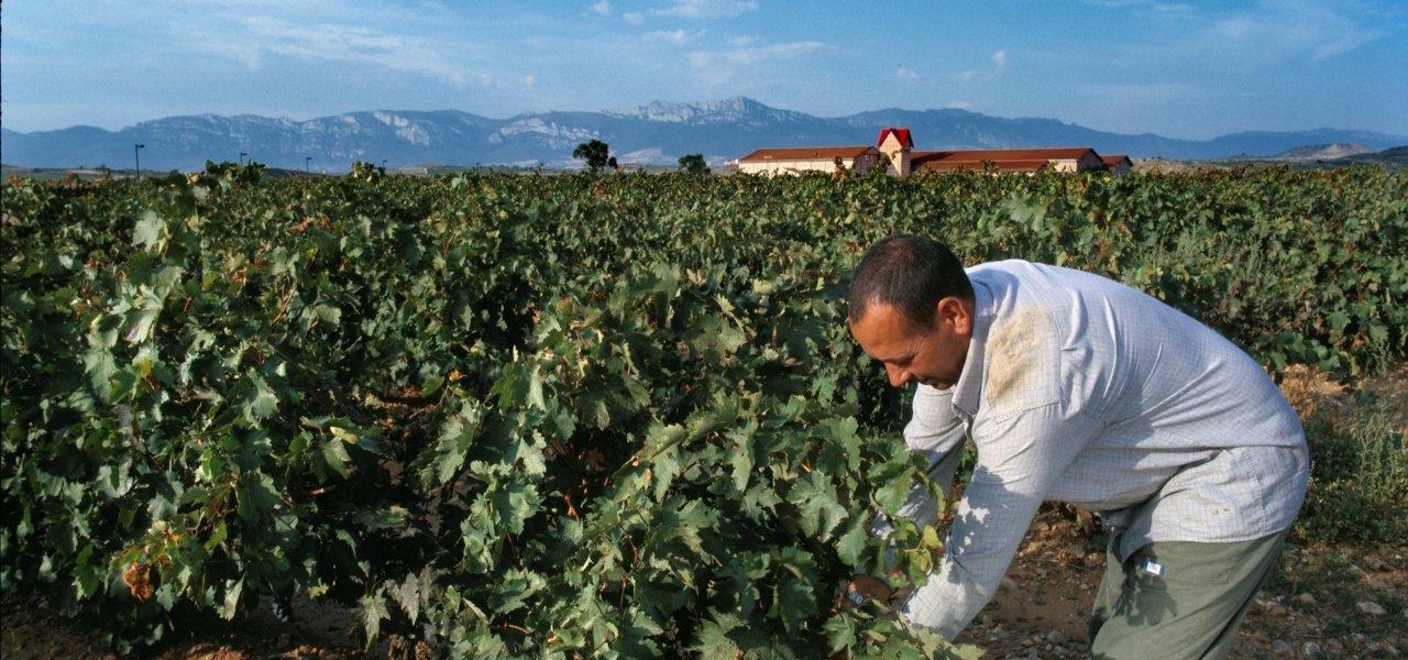 vineyards at finca valpiedra