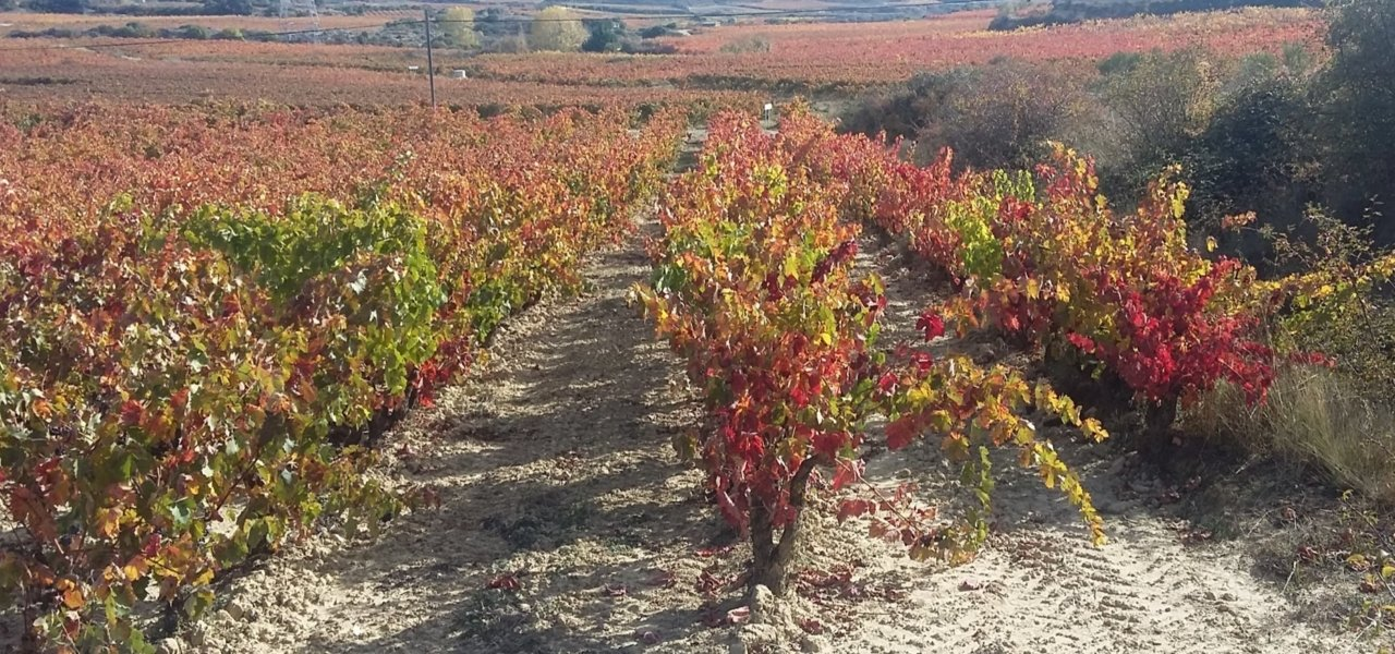 Fall in Rioja