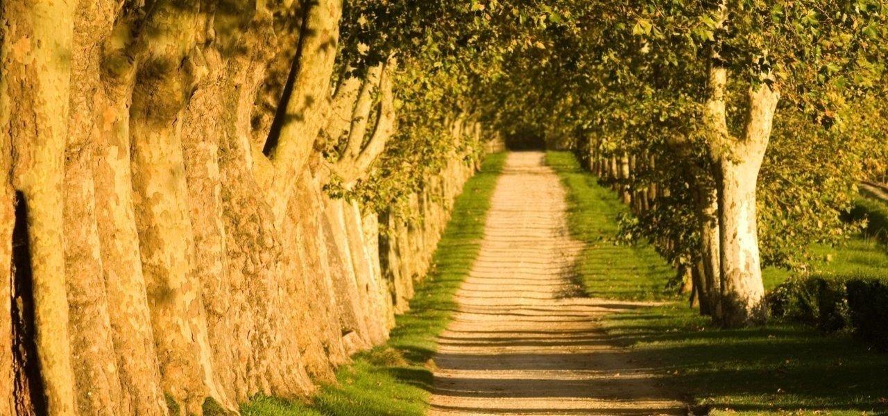 Way to Chateau Guiraud