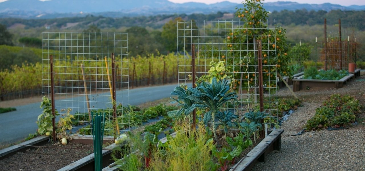 A chef's garden - a true definition to farm to table dining in Sonoma Valley