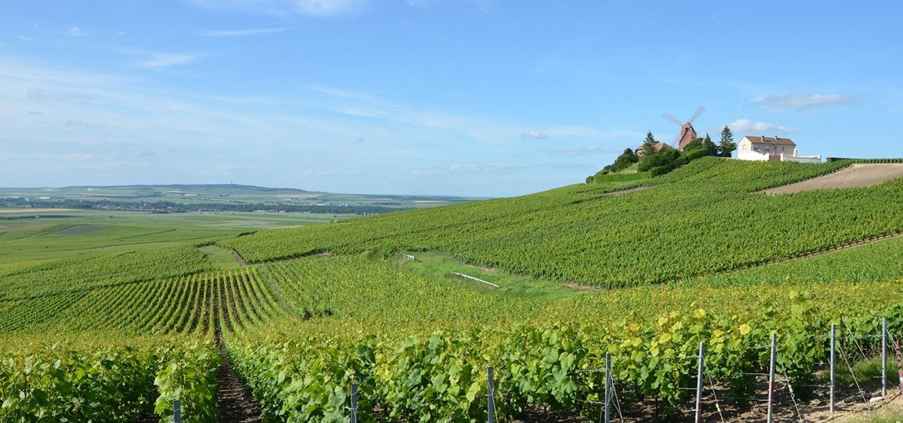 bike and wine tours chamapagne