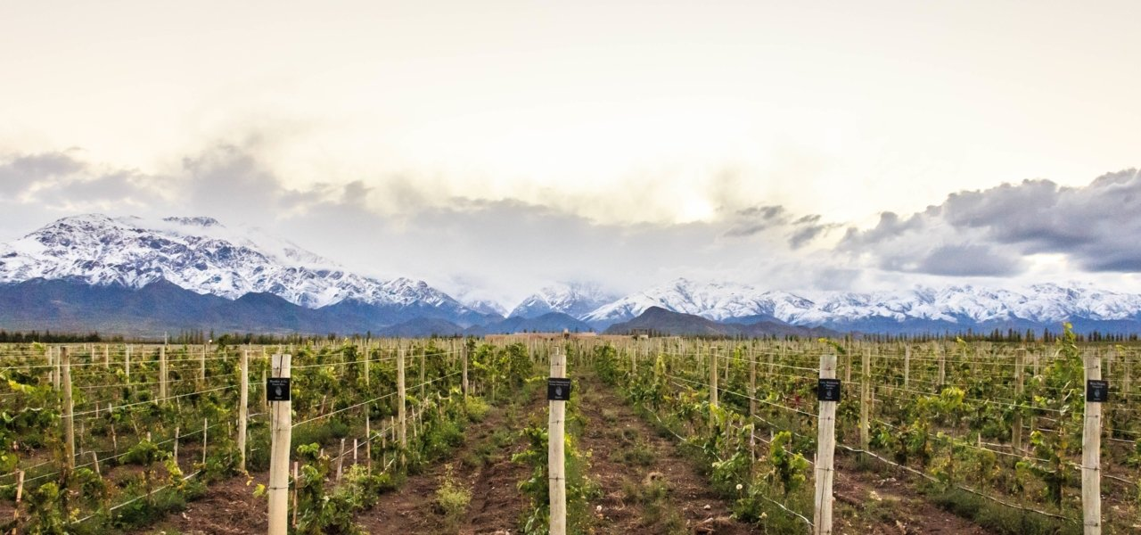 Alpasion Vineyard and Andes Mountains