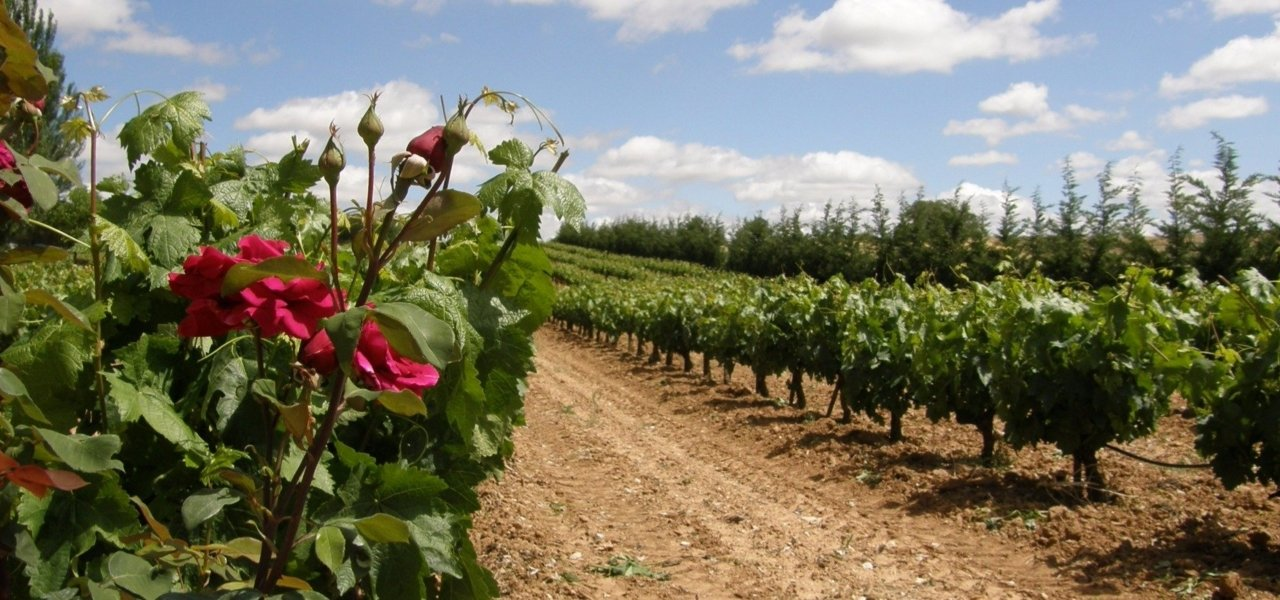 Local wine travel expert in Northern Spain
