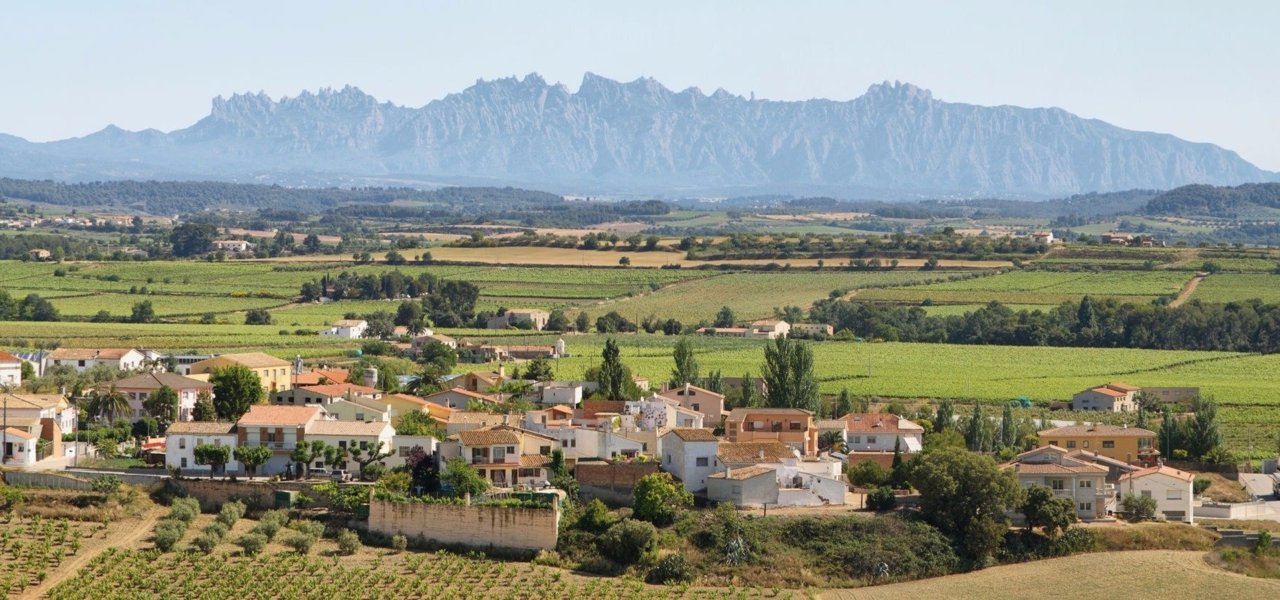 Penedes Region: vineyards protected by the Holy Montserrat Mountain.