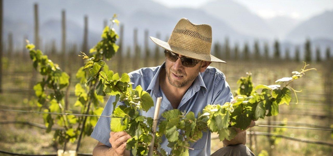 Alpasion Winemaker